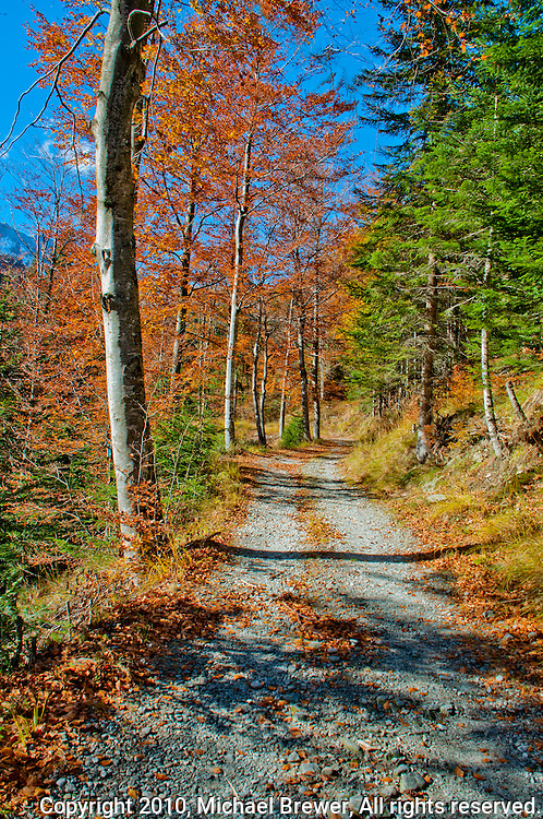 Dirt road leading past an autumn forest in Valle Onsernone, Ticino, Southern Switzerland.