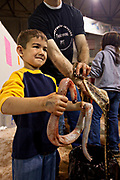 A young boy smiles after skinning a western diamondback rattlesnake during the 51st Annual Sweetwater Texas Rattlesnake Round-Up March 14, 2009 in Sweetwater, Texas. During the three-day event approximately 240,000 pounds of rattlesnake will be collected, milked and served to support charity.