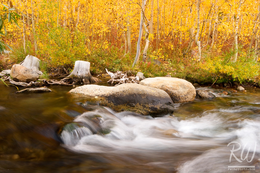 Middle Fork Bishop Creek Fall Foliage, Inyo National Forest, California