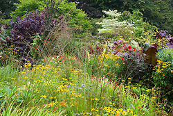 Hot borders in the brick garden at Glebe Cottage with Rudbeckia fulgida var. deamii AGM, Molinia caerulea 'Edith Dudszus', Cercidiphyllum, asters, cotinus, and dahlias