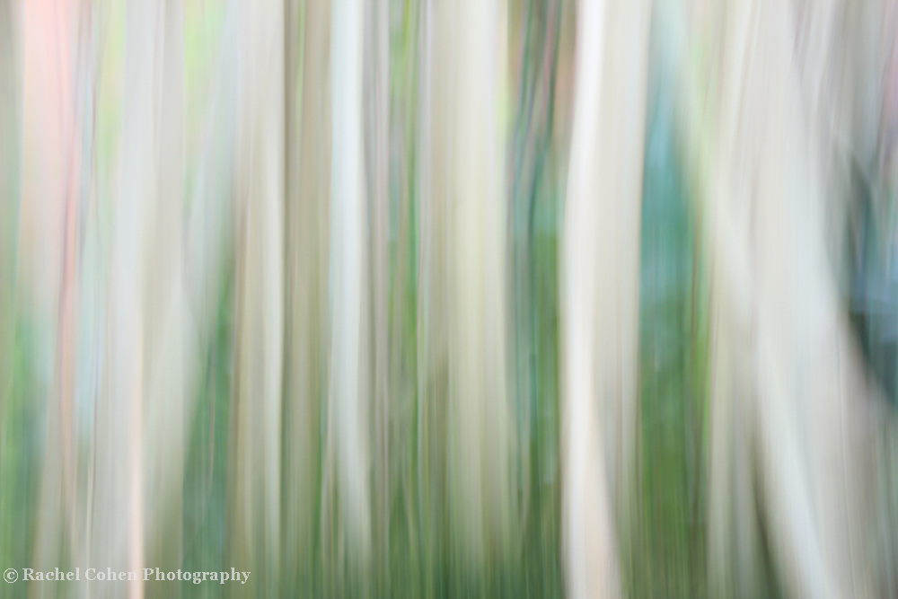 &quot;Roots&quot;<br />