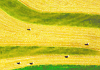 Aerial view of bales of hay
