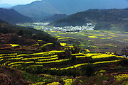 SHANGRAO, CHINA <br /> <br /> Stunning pictures of rape bloom flowers in China<br /> <br /> Rape flowers bloom over the terrace at Huangling Village in Wuyuan County <br /> &copy;Exclusivepix Media