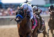 Belmont Festival CHC Horses