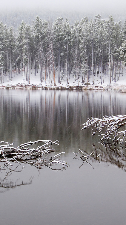 Fallen Trees, Sprague Lake, Rocky Mountain National Park