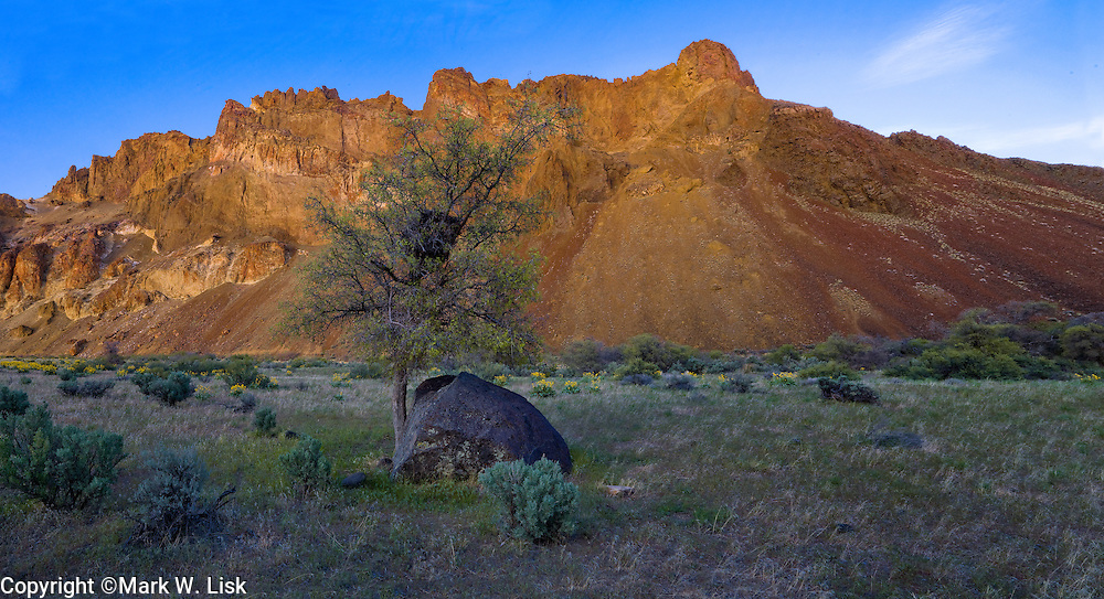 A Hackberry tree rest agianst a basalt boulder on Greeley Flat in the Lower Owyhee River Canyon, Oregon.