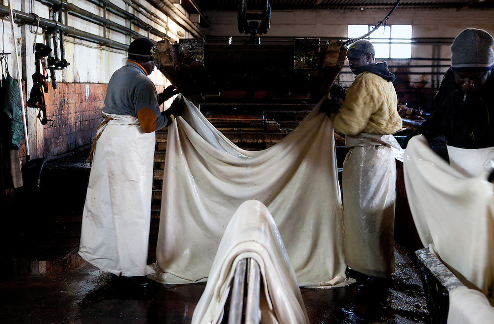 Santa Croce Sull'Arno, Italy. Italcuoio tannery SPA. After the 'riviera' process, the skins are hung on a shell to dry before starting the process of slow tanning in the tank..