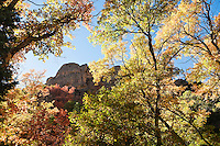Rock walls and Autumn trees in Maple Canyon, Utah, USA.