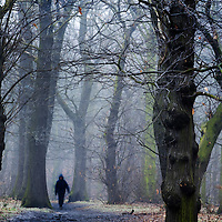 Young child walking through woods alone