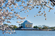 Jefferson Monument, Tidal Basin, Washington DC, Spring Cherry Blossoms