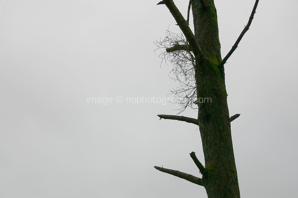 tree against grey sky