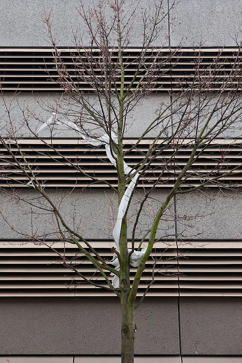 Germany - Deutschland - BERLINER GRAU - BERLIN GREY Project - Kreuzberg, Parkhaus mit Baum; 29.11.2010; © Christian Jungeblodt