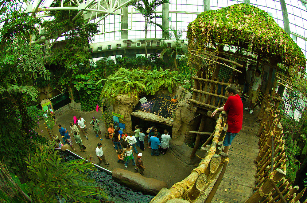 Amazon Rainforest, Aububon Aquarium of the Americas, New Orleans, Louisiana, USA