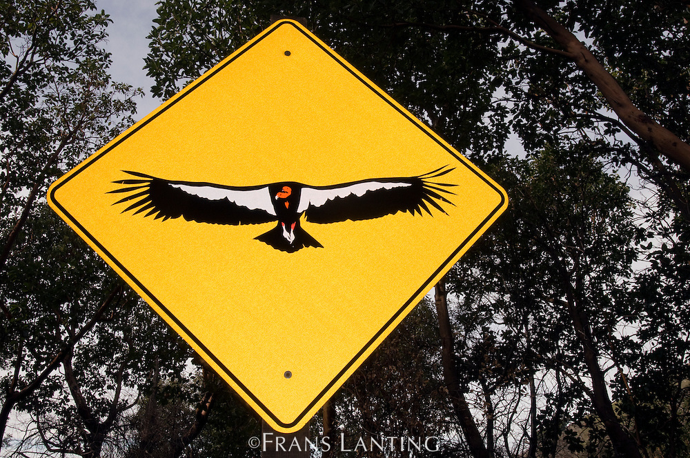 California condor sign, Big Sur, California