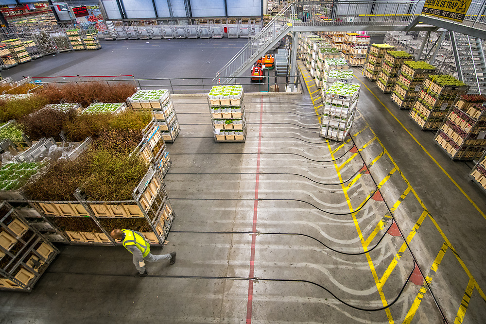 Carts of prepared flowers in a warehouse at the worlds largest flower auction, Royal Flora Holland. Amsterdam, Netherlands