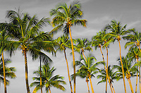Palm trees of this Caribbean beach.