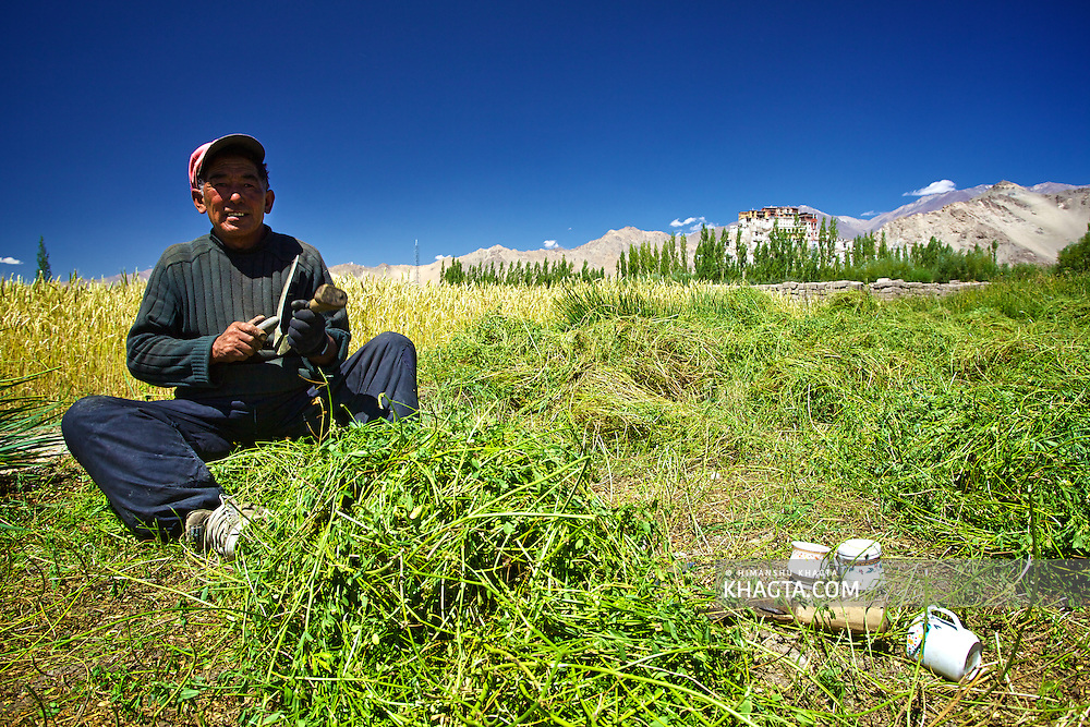 A farmer sharpening the knife in his field in Thiksey village, near Leh, Ladakh.