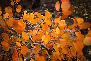 Fall in Colordo