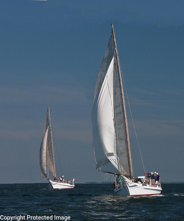 Skipjacks on the Chesapeake Bay