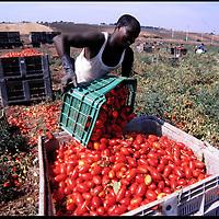 Raccolta Pomodori in Puglia