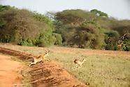 Kenya Safarai - Tsavo East