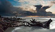 Sunset sheds light upon a stormy anvil cloud, rain showers, blue sky, and a jumble of log driftwood on gray sand seen from Kalaloch Beach, Olympic National Park, Washington, USA. Panorama stitched from 2 images.