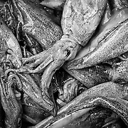 A close up of several dead squid at a fish market in Chinatown, NY.