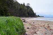 The rocky beach, shore grasses, and beach front homes from Rathtrevor Beach Provincial Park in Parksville, British Columbia, Canada