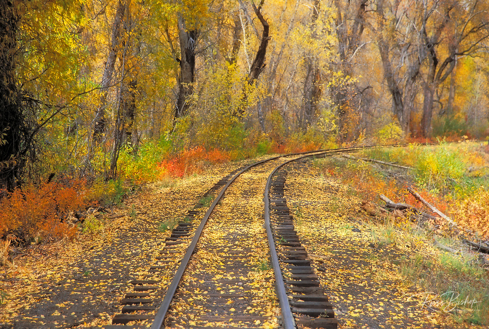 Fall color and train tracks, Cumbres & Toltec Scenic Railroad, Chama, New Mexico USA