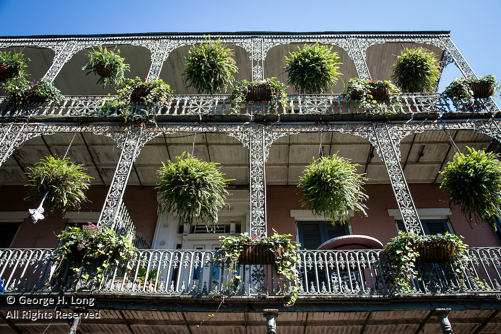 ferns on French Quarter wrought iron balcony; New Orleans, Louisiana