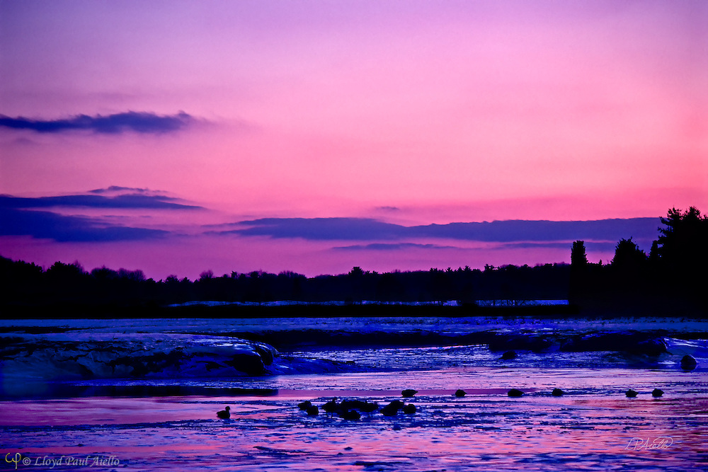 A flock of ducks rest on the frozen ocean mudflats at low tide with the ice and puddles reflecting the pinks, blues and mauves of a winter sunset in Duxbury, Massachusetts.
