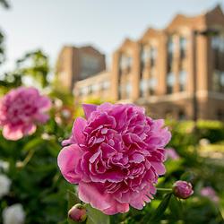 Summer Campus Scenics