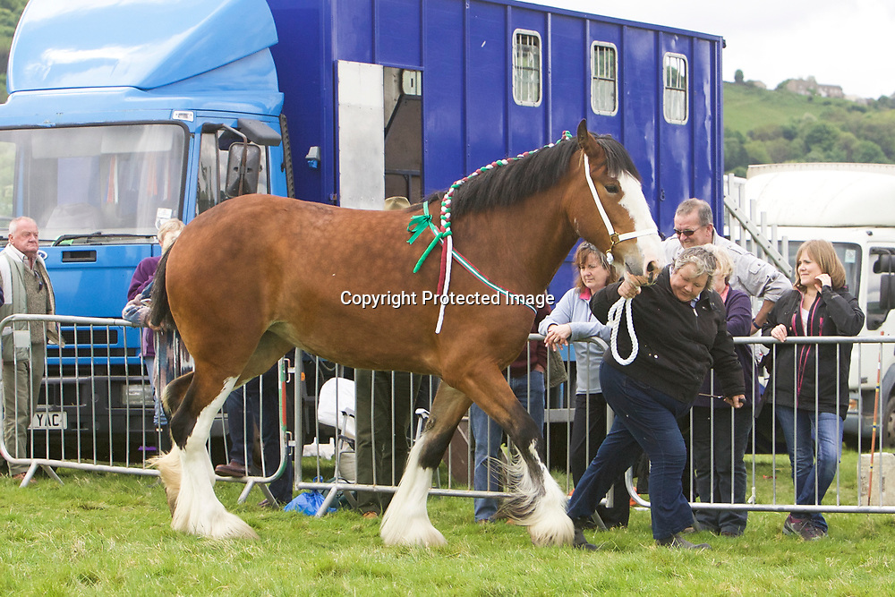 R &amp; S Cockfroft's Mare  SPRINGWELL HARTCLIFFE ADELE<br />