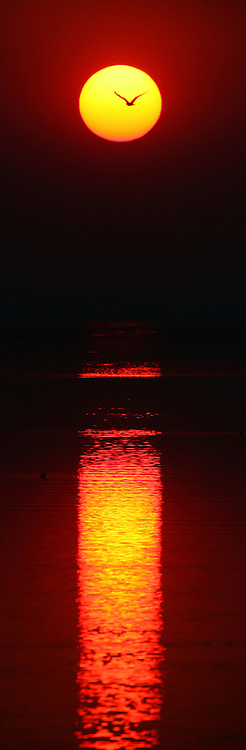 A seagull passes the sun as smoke from area wildfires dulls the light during sunset, July 9, 2007 on Antelope Island. Photo by Colin Braley