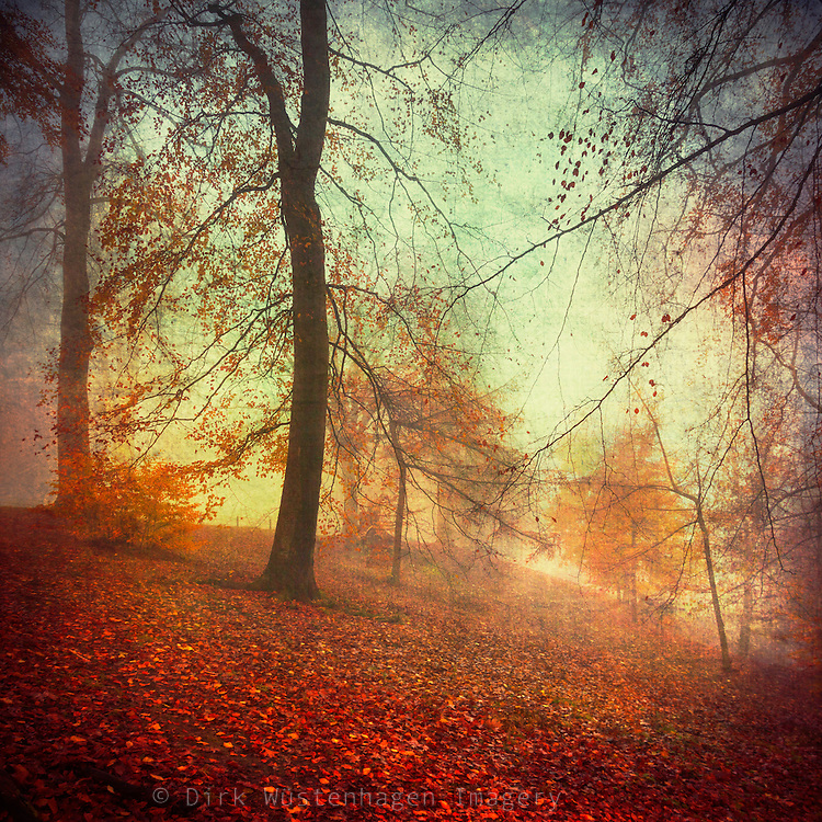 Misty day in a nearby par - texturized photograph.<br /> Prints: http://society6.com/DirkWuestenhagenImagery/Fall-Tapestry_Print
