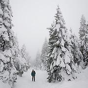 Europa, Deutschland, Sachsen-Anhalt, Harz, Brocken. Benno Schmidt alias Brocken-Benno hat bis zum Tag der Aufnahmen den Brocken 5.927 Mal bestiegen. Am 22.Mai 2010 ist sein 78. Geburtstag, dann will er sich zum 6.000 Mal einen Stempel beim Brockenwirt abholen.<br /> Europe, Germany, Saxony-Anhalt, Harz, Mountain Brocken. Benno Schmidt alias Brocken-Benno climbs the Mountain Brocken 5,927 times. At the 22. May he wants to climb at 6,000 ti&sbquo;&Otilde;;˛ ]h;&oelig;ˇ
