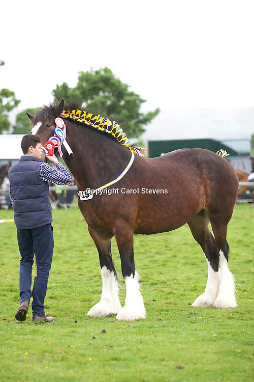 Fellthorpe Shires' Fellthorpe Esther Jane  (s  Moorfield Edward)<br />