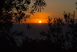 Sorrento, Italy, September 17 2017. The setting sun makes silhouettes of olive trees near Sorrento, Italy. © Paul Davey