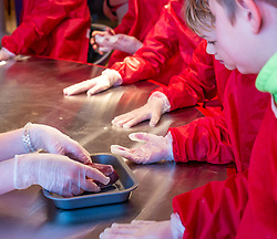 City Arts Centre, Edinburgh, Scotland, United Kingdom, 9 April 2019. Edinburgh Science Festival:  Children have fun learning about blood with a sheep heart at the Blood Bar drop in event with Science Communicator Hannah at the Science Festival. <br /> <br /> Sally Anderson | EdinburghElitemedia.co.uk