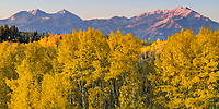 Panorama at sunrise of Guardsman Pass in Utah's Wasatch Mountains with bright yellow aspen leaves.