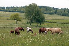 Eifel Gold Ranch 2003