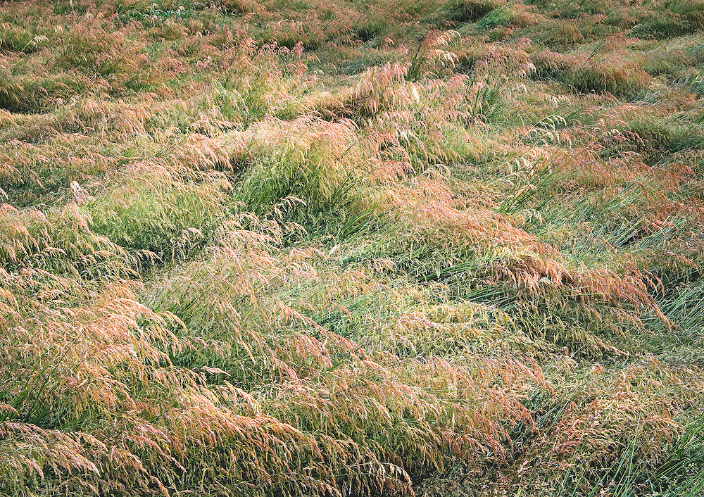 abstract patterns and colors in summer grass field, Eastern WA.