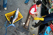 Negotiating Daily Catch - Jeju Island - South Korea