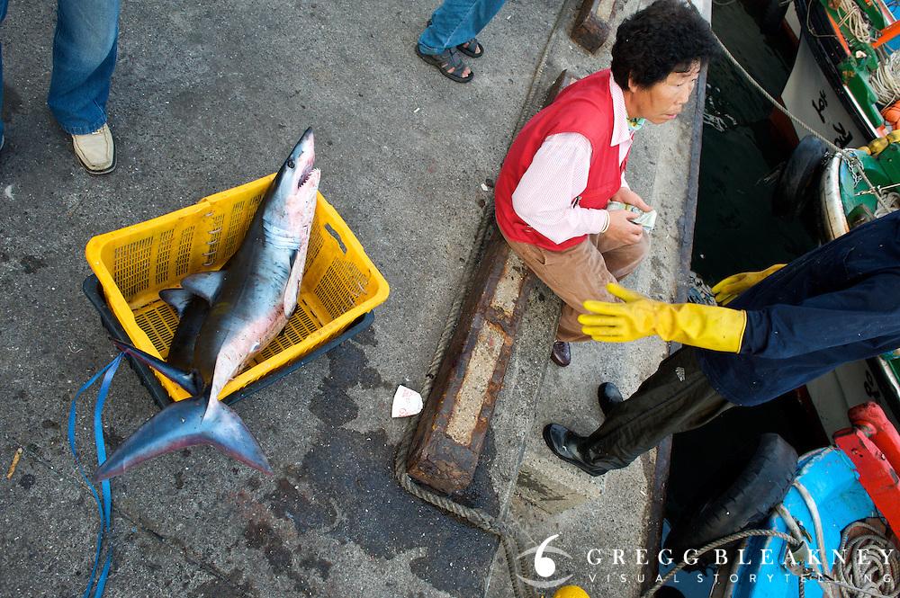Negotiating Daily Catch - Jeju Island - South Korea