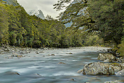 The Cleddau River flows through Fiordland's beech forest, with the iconic snow-capped Mitre Peak in the distance.