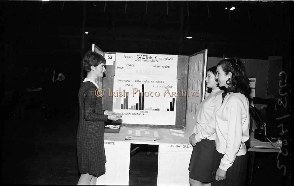 03/01/1967.01/03/1967.3rd January 1967.The third annual Aer Lingus Young Scientist Exhibition at the RDS..Aine Ni Mhurnain from Clocher Lughaidh Monaghan shows her exhibit 'Eifeacht Gaethe X ar Pheacu agus Fas Siolta' to Maire Ni Canna and Deirdre De Brian, both of Clocher Lughaidh Rath Maonais, Baile Atha Cliath.