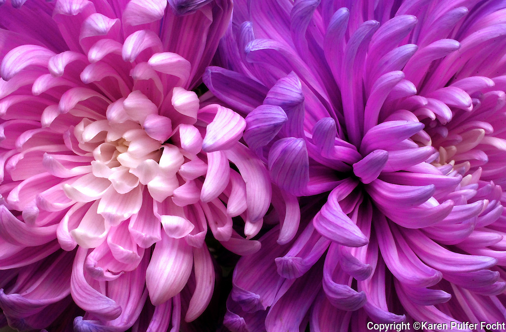 Purple and pink flowers.