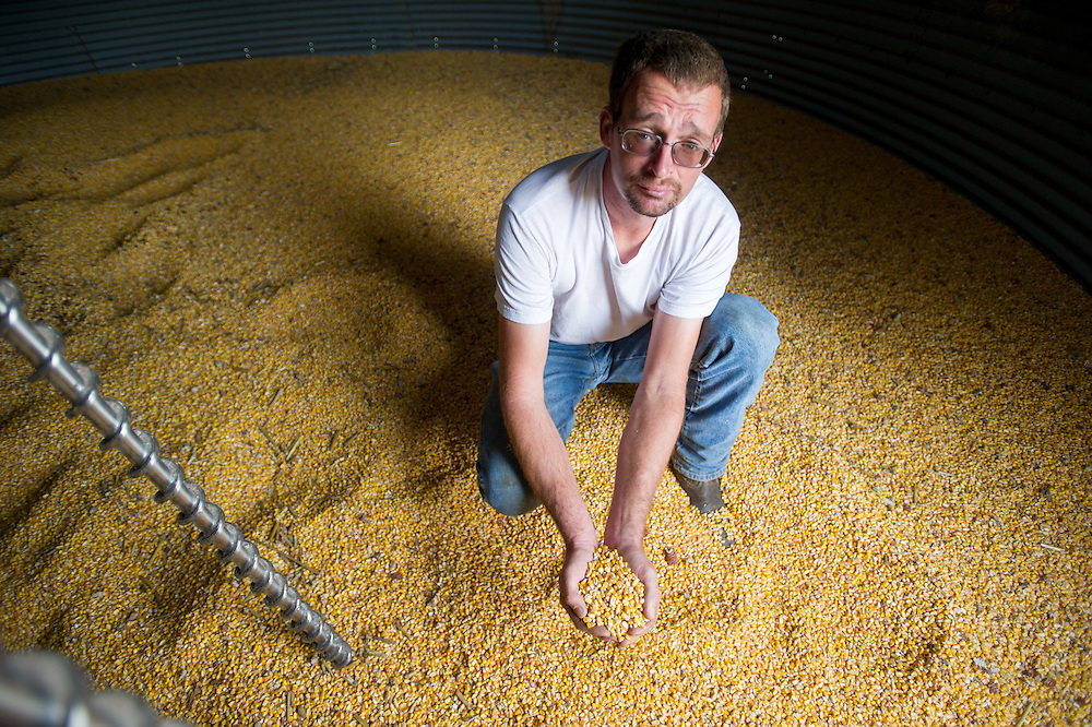 Farmer in grain silo holding corn with cupped hands in Millerstown, Pennsylvania, USA