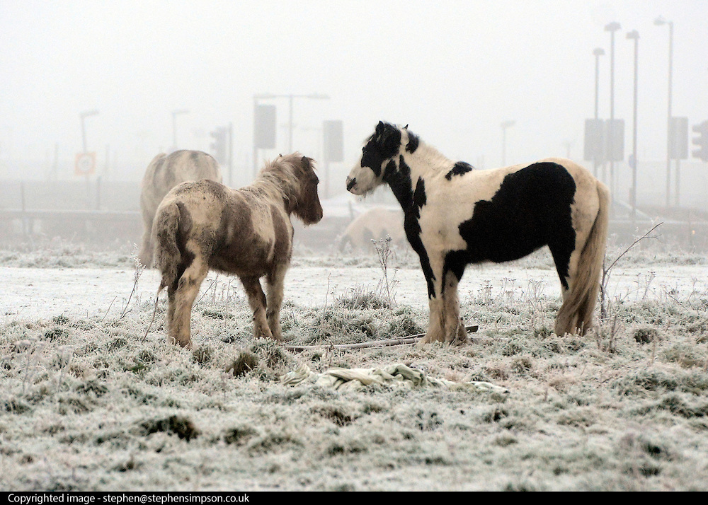 © Licensed to London News Pictures. 12/12/2012. Heathrow, UK Ponies stand in a field as heavy fog hangs above Heathrow Airport today, 12 December 2012. Fog at Heathrow airport this morning. Heavy fog is causing flights to be delayed and disruption across the country.  Photo credit : Stephen Simpson/LNP