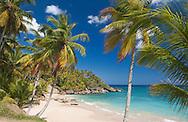 Beach with Palm Trees near Rio San Juan, Dominican Republic, Caribbean